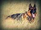 Straw Dog! by naturelover