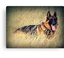 Straw Dog! Canvas Print