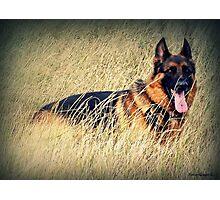 Straw Dog! Photographic Print