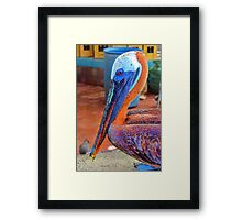 Galapagos Brown Pelican Waiting For A Free Meal Framed Print