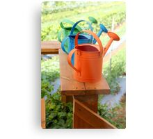 Watering cans at a small Organic vegetable patch  Metal Print