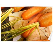 Home grown carrots from a small Organic vegetable patch  Poster