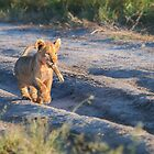 Cub's Prize by Owed to Nature