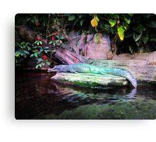 Magic Alligator Canvas Print
