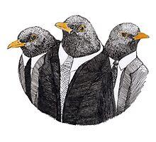 Three common black birds Photographic Print