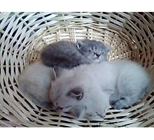 Spring Kittens Photographic Print