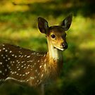 Baby Deer by jacqi