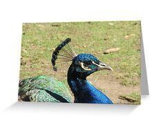 Peacock, Launceston Gorge Greeting Card