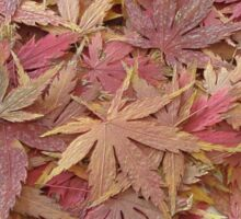 Maple Leaves Sticker
