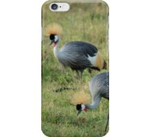 Grey crowned cranes iPhone Case/Skin