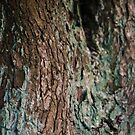 Tree Bark by Sarah Horsman