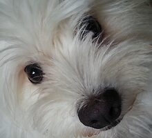 Emotional Support Dog (Portrait) by atlantean