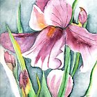 Purple Iris by Sandra Gale