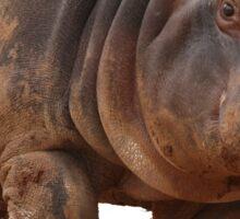 Baby Hippo on the Run: Tee Sticker