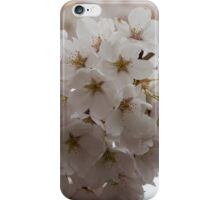 A Branch of Pale Pink Sakura Cherry Blossoms - Longing for Spring iPhone Case/Skin