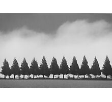 all in a row... Photographic Print