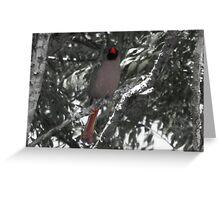 Red beak Greeting Card