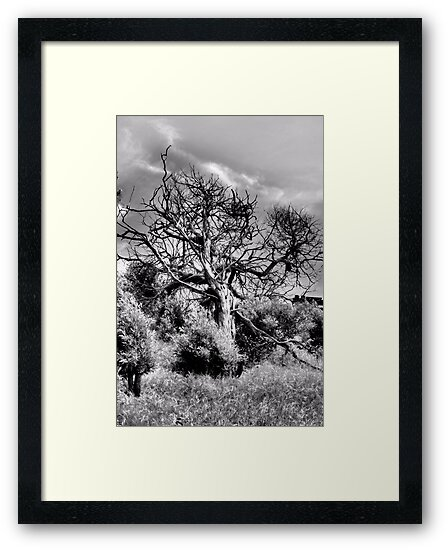 Tree On A Hill by Bob Wall