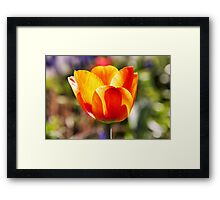 Cup of beauty Framed Print