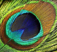 feather by motiashkar