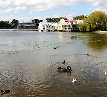 Ballarat's Lake Wendouree by jayview