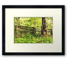 Impressions of Gardens - Colorful Tulips and a Rustic Fence Framed Print