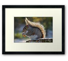 Squirrel Profile Framed Print