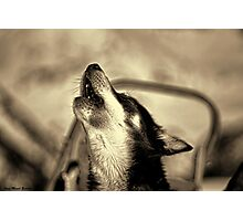 HOWLING DOG Photographic Print