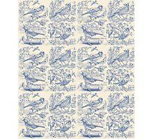 Garden Birds - Cream & Blue Photographic Print