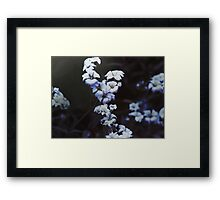 Flowers at Dusk Framed Print