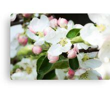 Spring tree flowers blosom Canvas Print