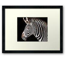 Grevey zebra Framed Print