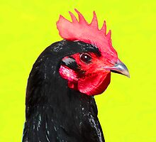 Black Hen on Yellow by picketty