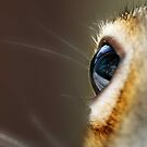 I got my squirrely eye on you !  by Bine