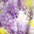 Wisteria Garden 4 by JennyRainbow