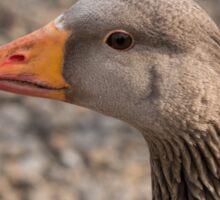 Greylag Goose Sticker