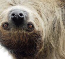 Sloth Sticker