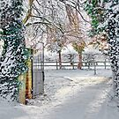 Winter Time by AnnDixon