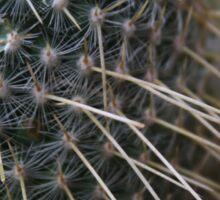 Cactus Needles Sticker