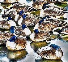 Sleeping Geese by Michael Andersen