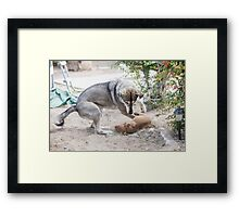 A mature dog and a puppy play in the yard  Framed Print