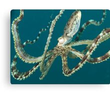 Mimic Octopus Canvas Print