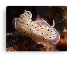 Tritos Chromodoris Canvas Print