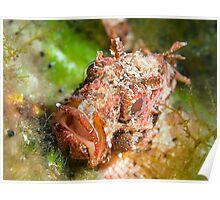Dwarf Scorpionfish Poster
