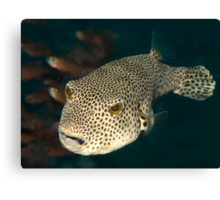 Giant Puffer Canvas Print