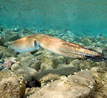 Octopus Cyaneus by Valerija S.  Vlasov
