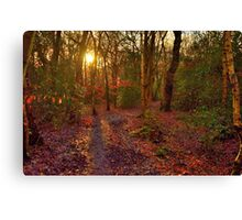 Eastham Woods 2 Canvas Print