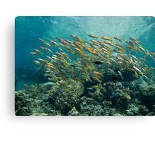 Reef landscape with goatfisch school Canvas Print