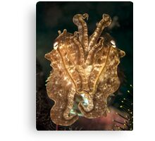 Reef Cuttlefish Canvas Print