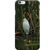 Snowy Egret in Shallow Water iPhone Case/Skin